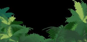 Eco-Palm-Bio